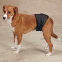 Pampers pour chiens